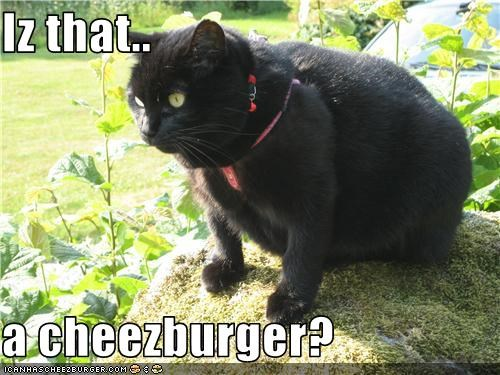 Cheezburger Image 3486255872