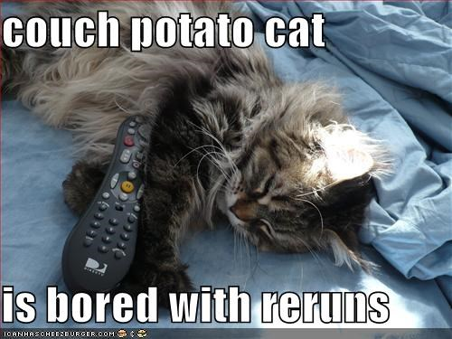 Image result for couch potato meme