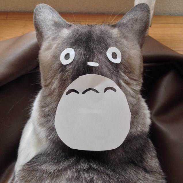 turn your cat into cute totoro