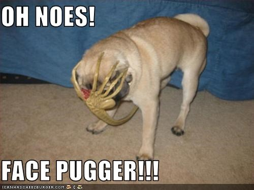 Cheezburger Image 3486473472