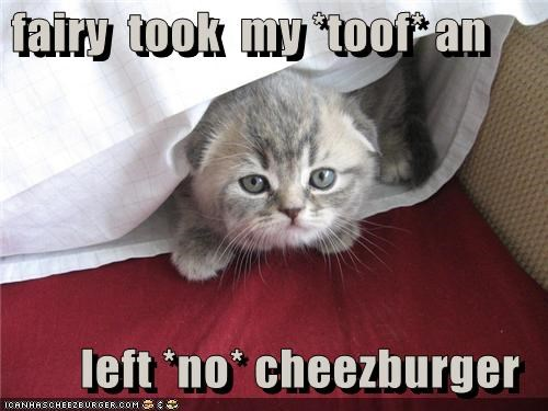 Cheezburger Image 3486544128