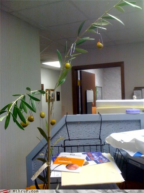 bizarre boredom creativity in the workplace cubicle boredom cubicle fail decoration drugs were probably involved gnar gross i have no idea nasty olive tree olives peace offering maybe probably stinks Sad sculpture so confused strange wasteful wtf - 3486868992