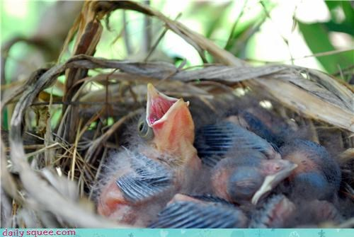 adorable baby bird - 3487197440
