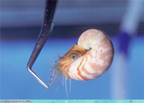crustacean water - 3487340288