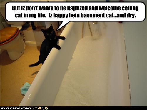 basement cat bath ceiling cat do not want - 3488358144