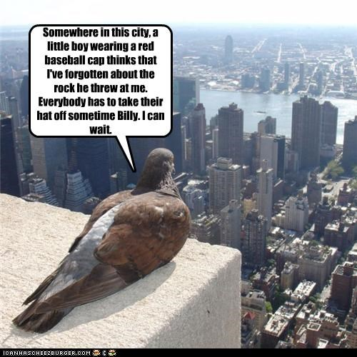 lolbirds pigeon plotting - 3488496384