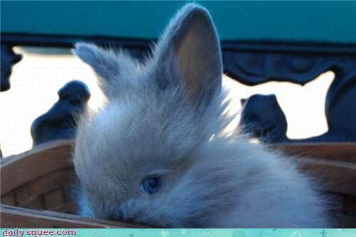 bunny eyes squee - 3488611072