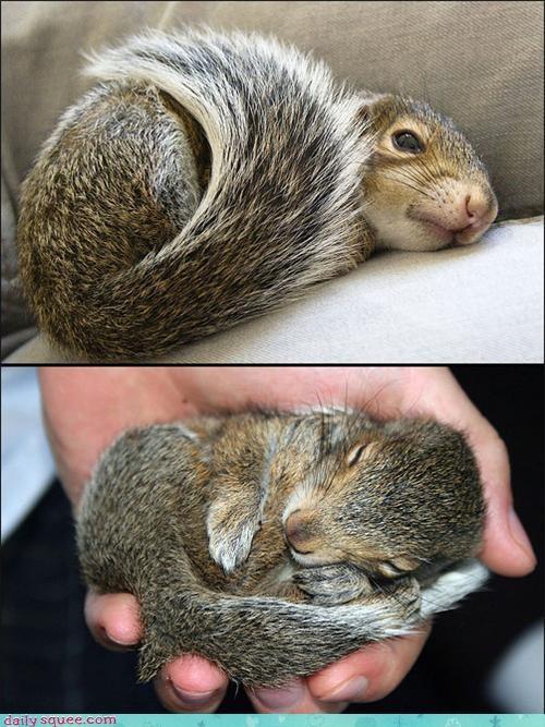 face nose squirrel - 3488616192