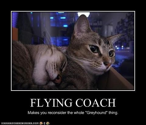 """FLYING COACH Makes you reconsider the whole """"Greyhound"""" thing."""