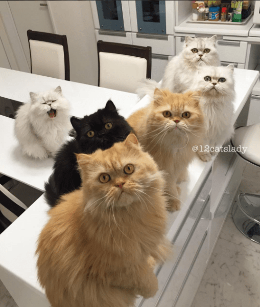 life with 12 cats