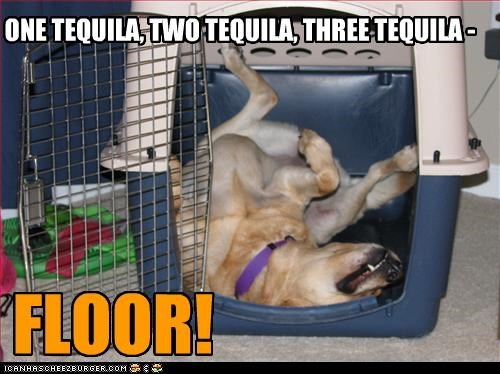 ONE TEQUILA, TWO TEQUILA, THREE TEQUILA - FLOOR!
