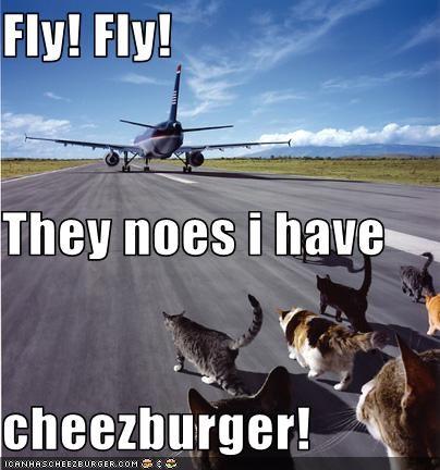 Cheezburger Image 3489689600
