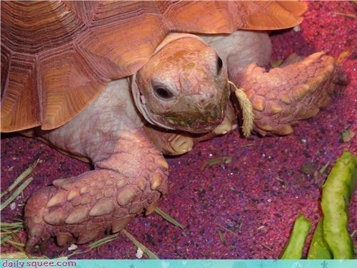props sea turtle turtle - 3490555904