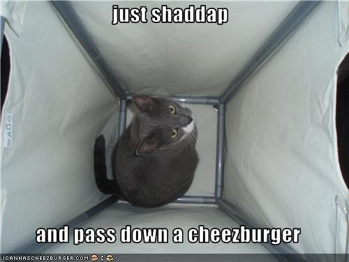 Cheezburger Image 3490967808