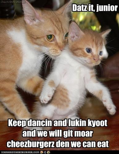 cheezburger cute dancing kitten momcat plotting - 3491863040