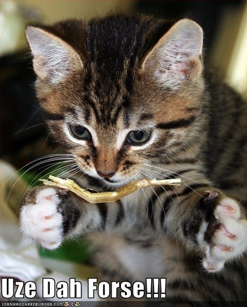 force kitten movies star wars - 3492299008