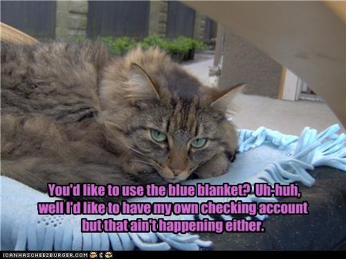 blanket,busy,greedy,nap
