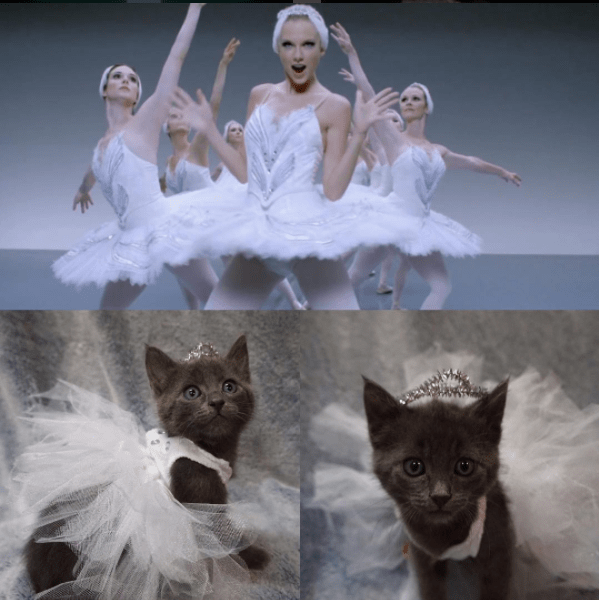 foster kittens dressed like taylor swift outfits