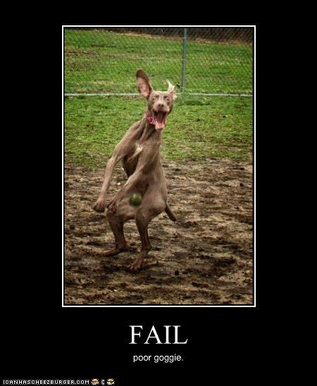 FAIL poor goggie.
