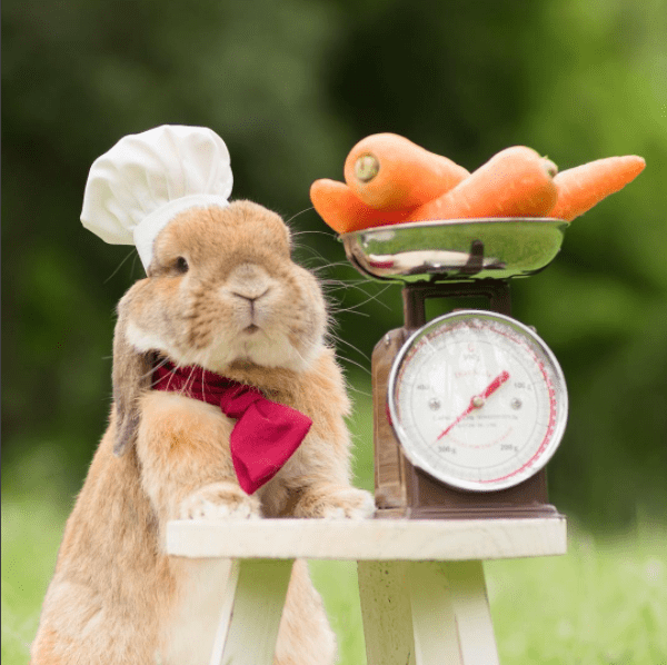 bunny is busy today