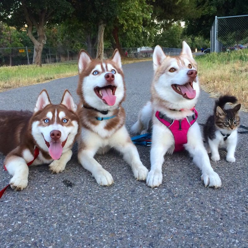 the story of a fearless cat running with dogs