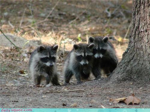 nerd jokes,qwantz,raccoons
