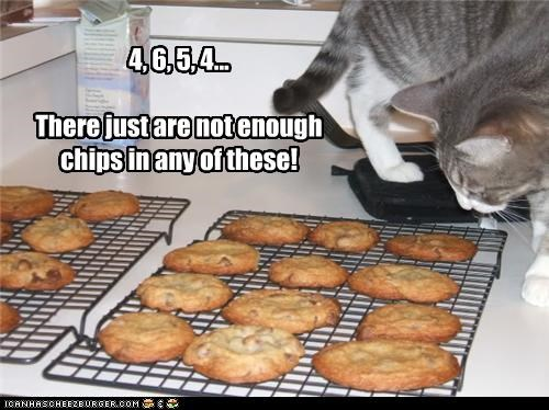 Cheezburger Image 3494496256
