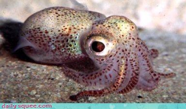 cephalopod,eyes,gross