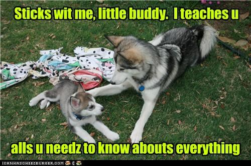 grass husky outside puppy sheets - 3495692032