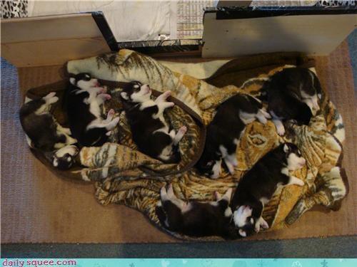 nerd jokes puppies puppy - 3495708672