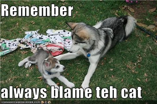advice,always,blame,cat,husky,parent,puppy,remember,rule of thumb