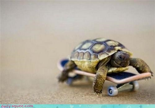 nerd jokes so tiny turtle - 3495863040