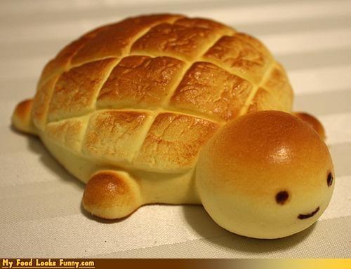 bread bun cute squee turtle turtle bun turtle loaf - 3495864576