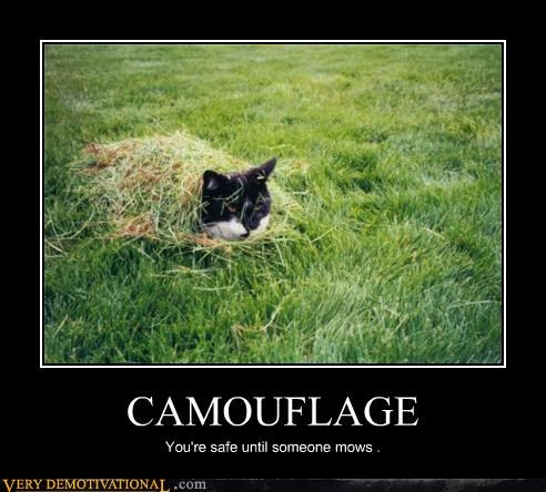 camouflage Cats grass lawnmower nature Terrifying vs-man - 3496082688