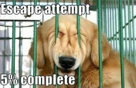 Funny picture of a dog doing horrible job escaping from his cage