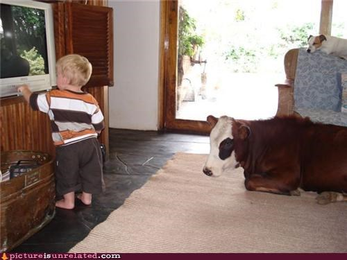 animals,cows,dogs,home life,kids,wtf