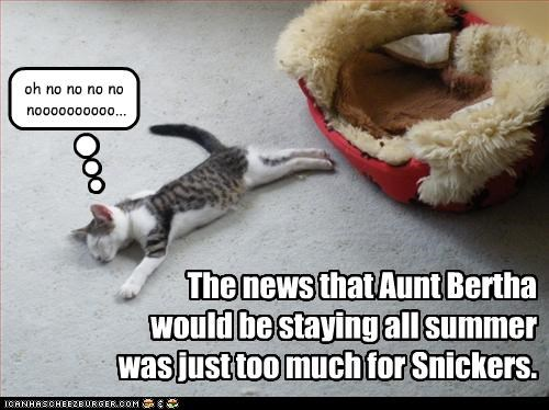 The news that Aunt Bertha would be staying all summer was just too much for Snickers. oh no no no no noooooooooo...