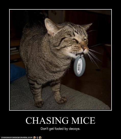 CHASING MICE Don't get fooled by decoys.