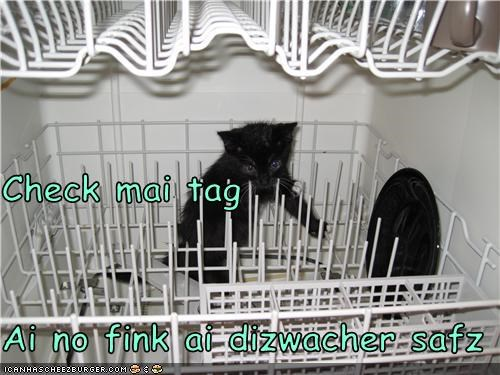 cute dishwasher kitten wet - 3499083008