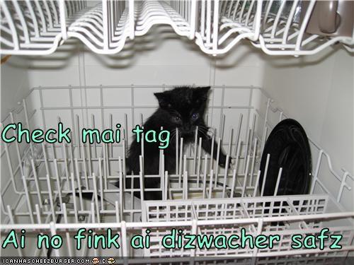 cute dishwasher kitten wet - 3499083008