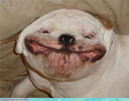 dogs face nerd jokes - 3499242496