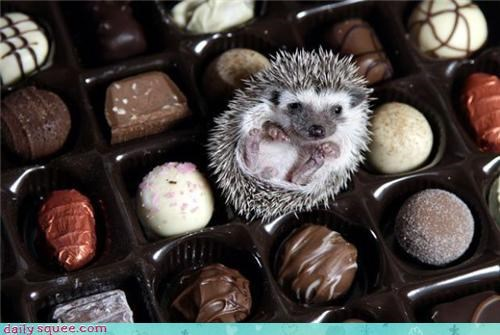 hedgehog,noms,so tiny