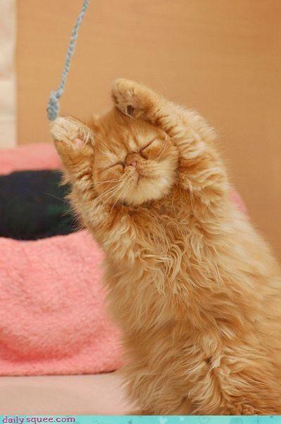 kitty sorry zen - 3499247616