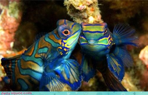 colorful,fish,KISS