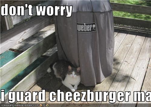 Cheezburger Image 3499604736