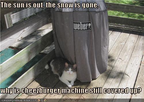 Cheezburger Image 3499701248