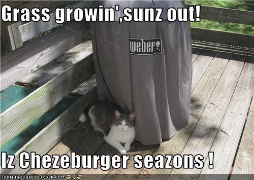 Cheezburger Image 3499831040
