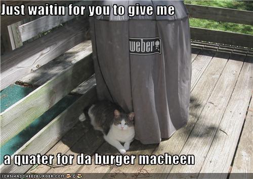 Cheezburger Image 3499943680