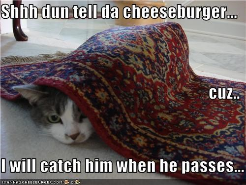 Cheezburger Image 3499973120
