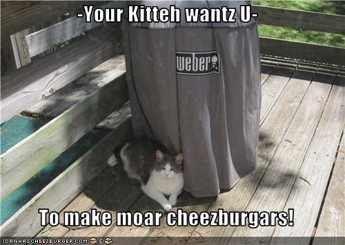 Cheezburger Image 3500133632
